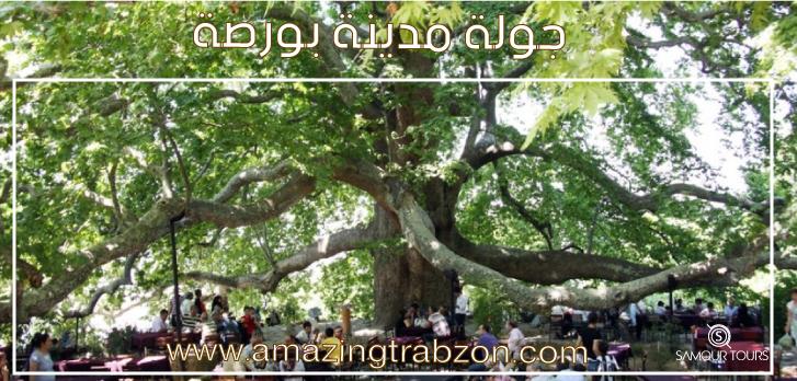 جولة-بورصة-الشجرة-العملاقة