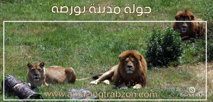 حديقة-الحيوان-في-بورصة